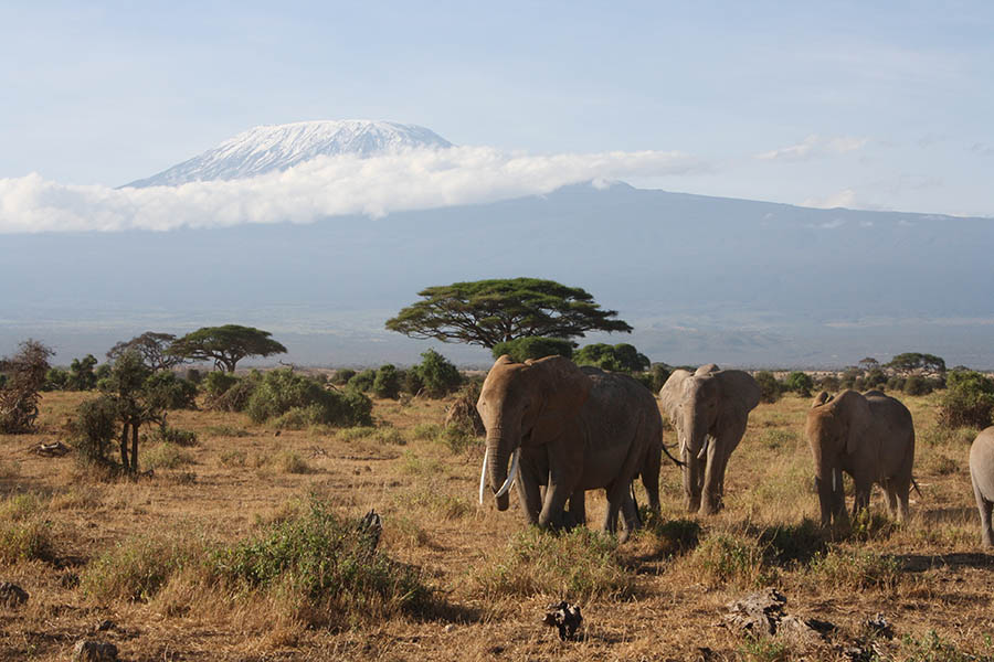 Как я искал симку для мобильного интернета и связи в поездку на сафари в Кению. Сравнивал тарифы и выбрал Глобалсим.