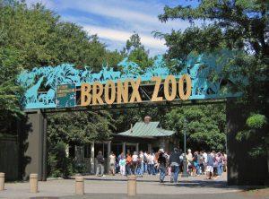 Зоопарк в Бронксе