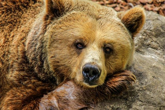 Лучшие зоопарки Европы, которые стоит посетить