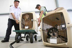 животных в самолете перевозят в клетке