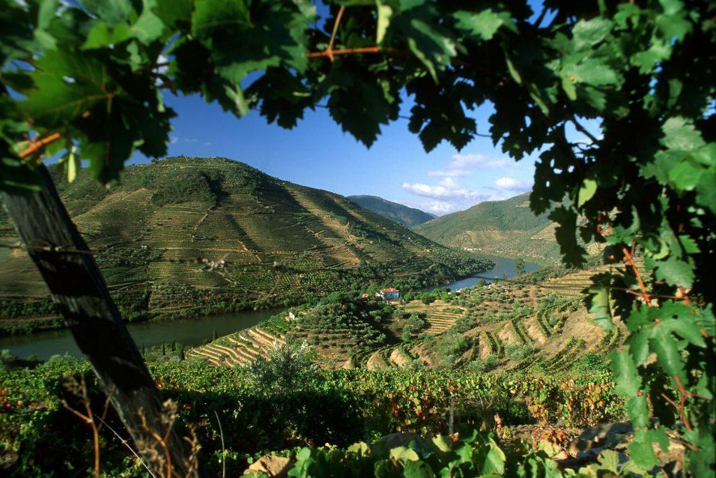 винодельни португалии