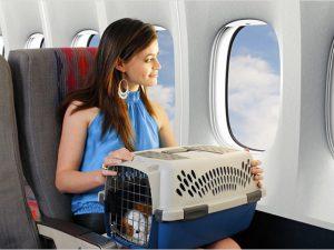что должен знать хозяин животного при перелете