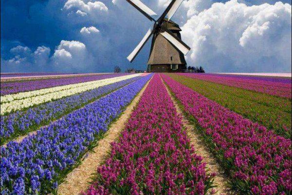 путешествие в голландию, мобильный интернет в нидерландах