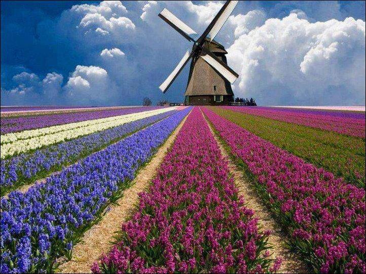 Прогулка по Голландии. Мобильный интернет в Нидерландах.