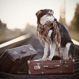 путешествие с домашним любимцем