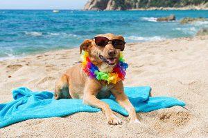 специально оборудованный пляж для собак