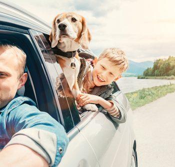 путешествие с животными