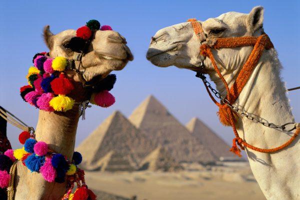 Мобильный интернет в Египте