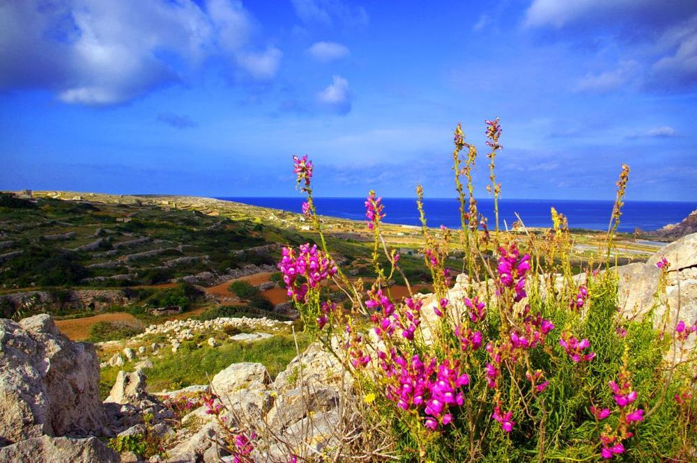 Поездка на Мальту