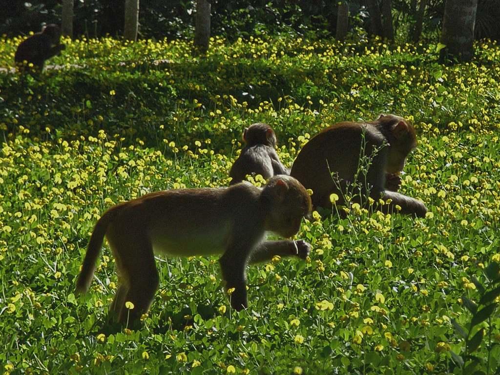 Monkey Island Nanshan