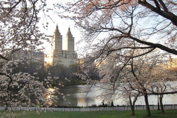 Деловая поездка в Нью-Йорк и мое мнение о Vodafone