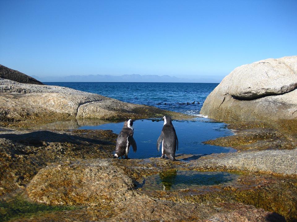 How to Visit the Cape of Good Hope, Лето в декабре: лучшие направления для туризма