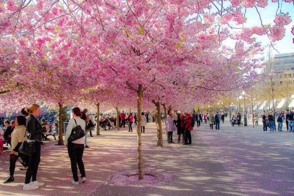 Бюджетное путешествие в Японию: как сэкономить и почему стоит поехать?