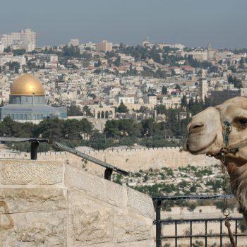Недорогой Интернет в Израиле: покупаем симку в России для путешествия в феврале