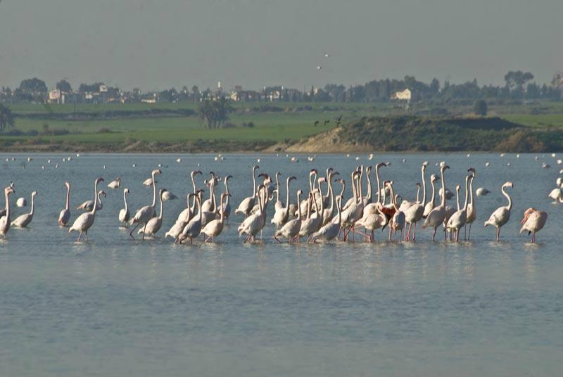 Стоит ли приезжать в феврале на Кипр?