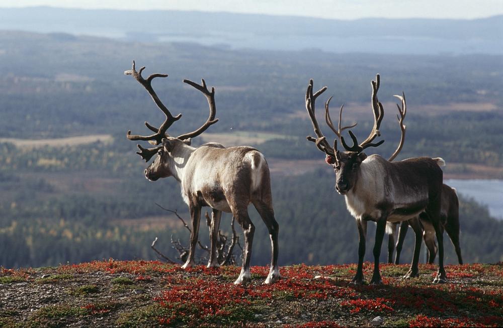 Чего вы не знали о Финляндии: самые интересные факты о стране и её жителях