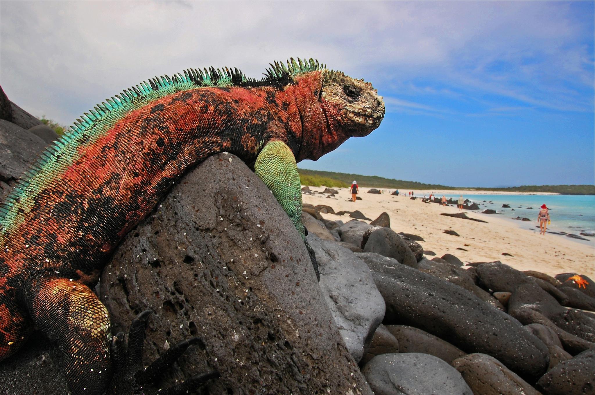 Галапагосские острова виза