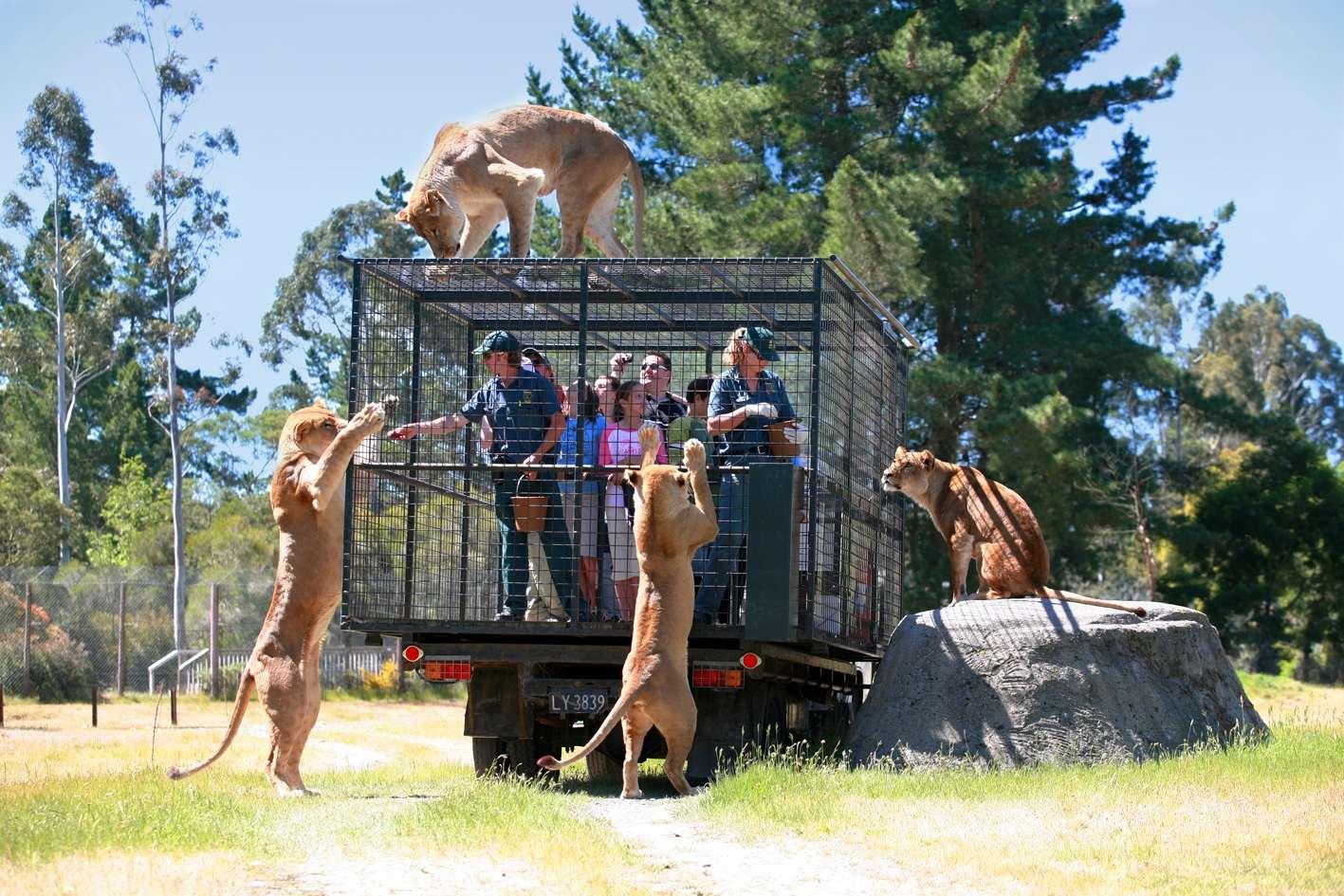 В этом зоопарке посетители в клетках! Животные гуляют на свободе