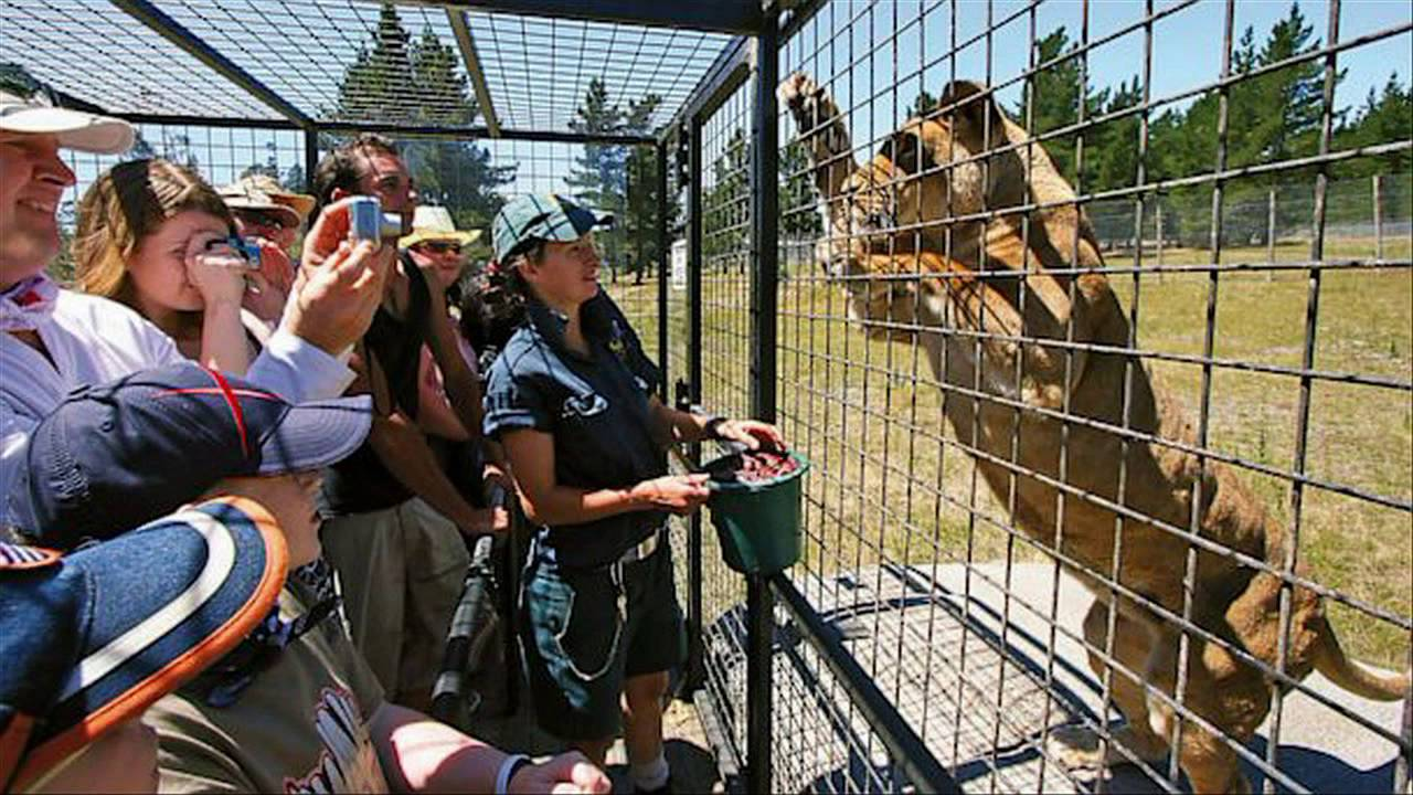 зоопарк Lehe Ledu Wildlife