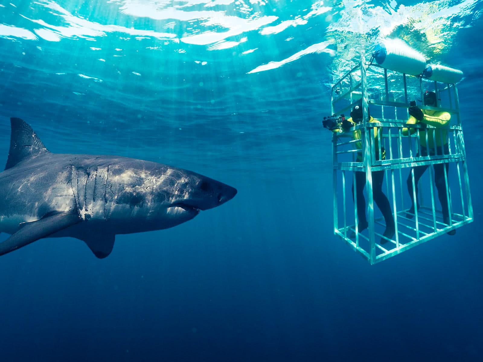 Дайвинг с Акулами Shark Cage Diving