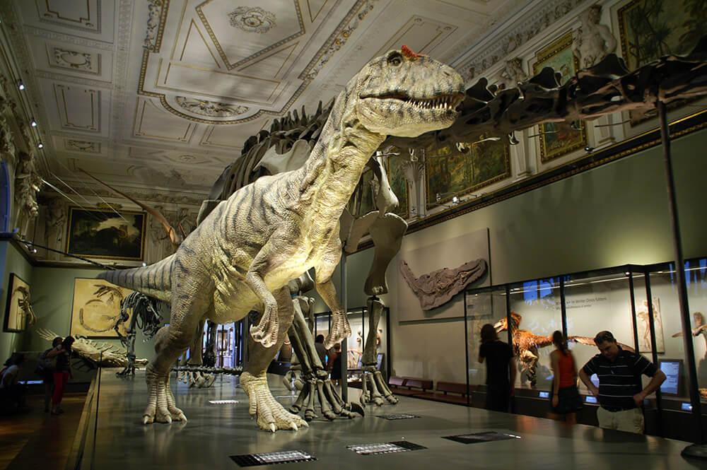 Советы для туристов. Как не переплатить за вход в музеи Европы. Музей Естествознания Вена