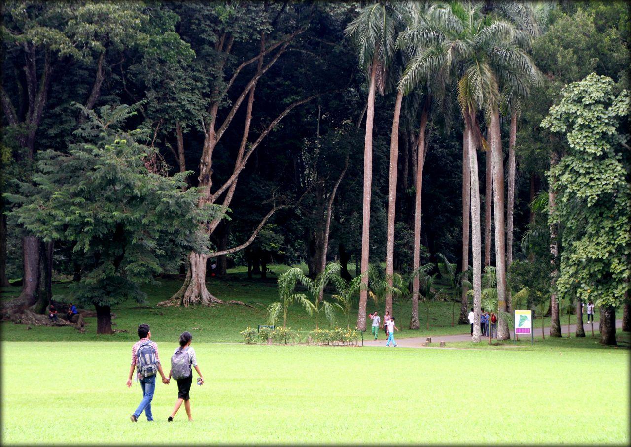 Ботанический сад в Парадении