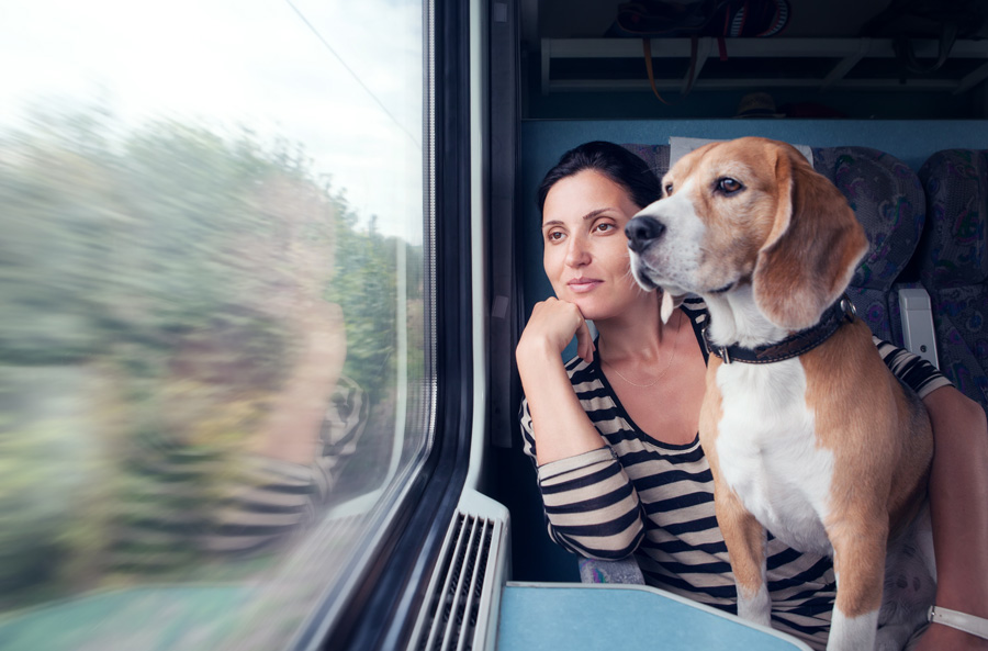 Путешествие с собакой в транспорте